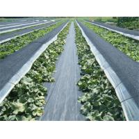 Buy Geotextile Stabilization Fabric , PP Woven Geotextile Separation Fabric For Farm / Plants at wholesale prices
