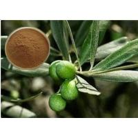 Quality CAS 32619-42-4 Cosmetic Raw Materials Olive Leaf Extract Powder For Digestive System for sale