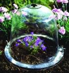Quality 2012 Plastic cloche for greenhouse HX35011 for sale