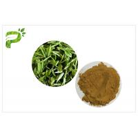 Quality Green Tea Polyphenols Plant Extract Powder 95% For Dietary Supplement Weight Loss for sale