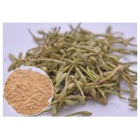 Quality treat cold, fever and infection Chlorogenic acid 5%, 25% Lonicera japonica Extract Honeysuckle flower powder for sale
