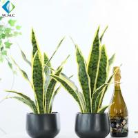 Green Artificial Potted Plants , Artificial Snake Plant Customized Design for sale