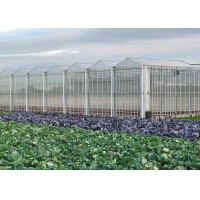 Quality Hydroponic Planting Agricultural Polycarbonate Greenhouse for sale