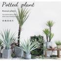ISO Desert Snake Plant Artificial Bonsai Tree Tiger Piran Aloe Sansevieria Seeds for sale