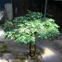 Bodhi Leaves Artificial Ficus Religiosa Tree Fiberglass / Wood Material for sale
