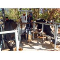 Quality High Efficiency Portable Milking Equipment Single Bucket Milking Machine for sale