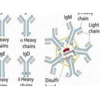 Buy cheap Recombinant Protein A Mutant of Staphylococcus Aureus  Lyophilized Powder product
