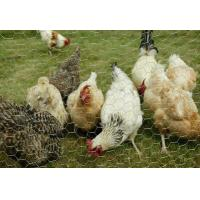 Quality  Chicken Mesh Wire Netting Supplier for sale