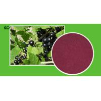 Quality Ribes Nigrum L Organic Food Ingredients Blackberry Fruit PowderWith Flavonoids for sale