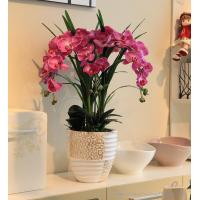 Orchid Pots Ceramic White Orchid With Ceramic Pot