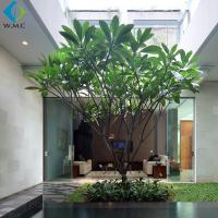 3.5m Artificial Plumeria Tree Without Flower , Customized Fake Green Trees for sale