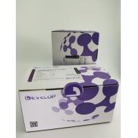 Buy Human Adenylate Cyclase 10, Soluble (ADCY10) ELISA Kit at wholesale prices