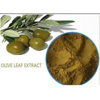 Quality Organic Olive Leaf Extract For High Blood Pressure ,  Pure Olive Leaf Extract Super Strength for sale
