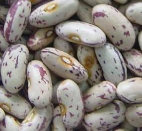 China Light Speckled Kidney Beans,Speckled Kidney Beans on sale