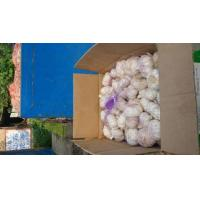 Quality Normal White Garlic for sale