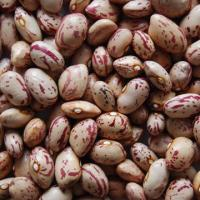 China round light speckled kidney beans on sale