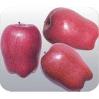 Quality Hua Niu Apple Supply time:From August to December of the year for sale
