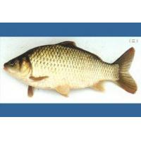 Quality Standard map of xiangyun fish for sale