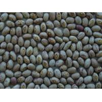 China Chinese Light Speckled Kidney Beans Round Shape Inner Mongolia Origin on sale