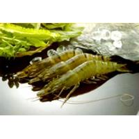 China Black Tiger Shrimp on sale