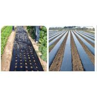 Quality Pe mulching film with hole for sale