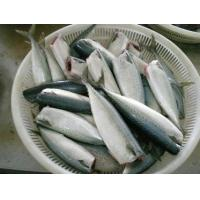 Quality Pacific mackerel HG for sale
