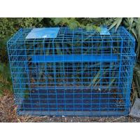 China Transport Cage on sale
