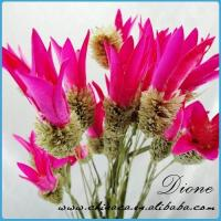 Wholesale natural dry flower for decoration