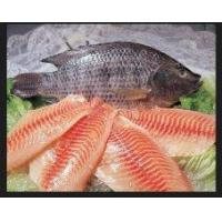 Quality Freshwater Frozen Tilapia Skinle for sale