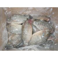 Quality Freshwater Frozen Tilapia Whole for sale