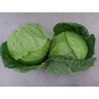 Quality small cabbage for sale