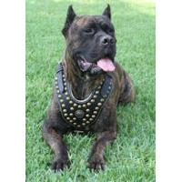 Quality Royal Design Studded Leather Cane Corso Harness for sale