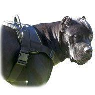 Quality Nylon multi-purpose dog harness for tracking-pulling-Cane Corso for sale