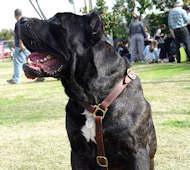 Quality Luxury Handcrafted Leather Dog Harness for Cane Corso for sale