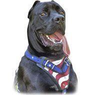 Quality American Flag Painted Leather Dog Harness-Protection Cane Corso Designer Harness for sale