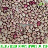 China Light Speckled Kidney Beans(Xinjiang Round) on sale