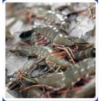 China Black Tiger Shrimp Feed on sale