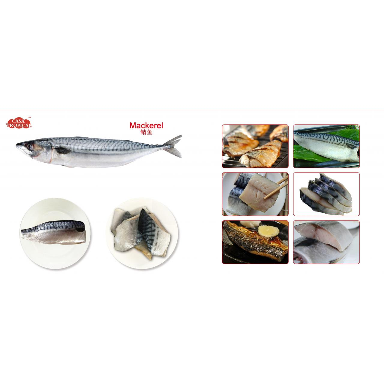 Quality Frozen mackerel fillet for sale