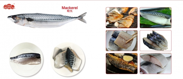 China Frozen mackerel fillet