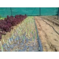 Quality Black Mulch Film for sale