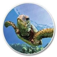 Quality Decor - Tropical Sea Turtle Absorbent Stone Coaster for Car Cup Holder 03-093 for sale