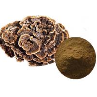 Quality Ratio Plant Extract Turkey Tail Mushroom Extract for sale