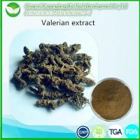 Quality Valerian Extract for sale