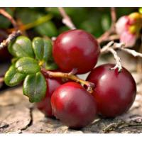 Buy cheap Cranberry Extract from wholesalers