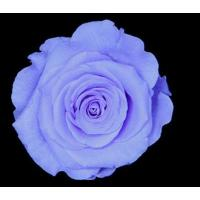Quality 4-5CM (8pcs-box) Solid color preserved rose head-15 for sale