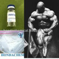 Buy cheap Painless Injectable Steroid Testosterone Enanthate 250mg/ml from wholesalers