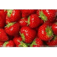 Quality Freeze Dried Strawberry Powder plant extract for sale