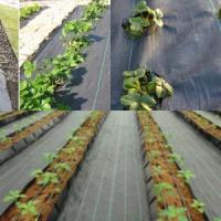 Quality PP/PE woven weed control mats for sale