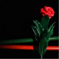 Buy Rose to Canes at wholesale prices