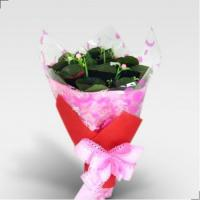 Buy cheap Holding a total of nine slow-opening roses from wholesalers